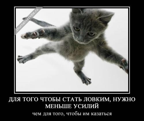 http://s2.uploads.ru/fZE91.jpg