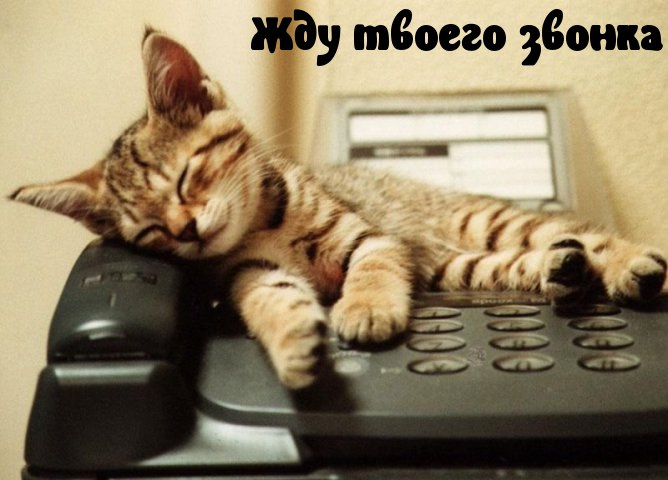 http://s2.uploads.ru/kMpyw.jpg
