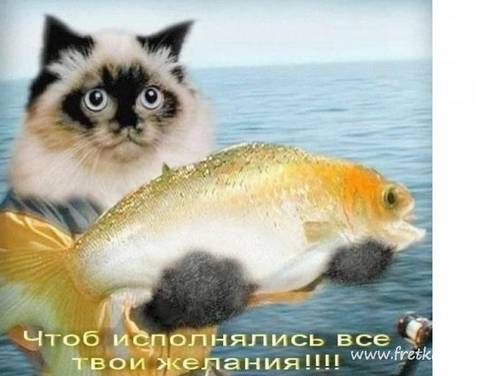 http://s2.uploads.ru/t/4SEBR.jpg