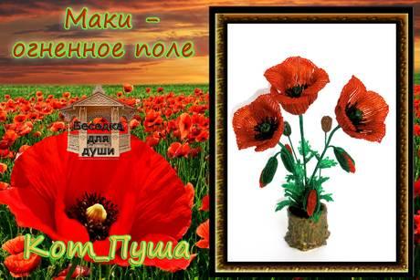 http://s2.uploads.ru/t/ThDKN.jpg