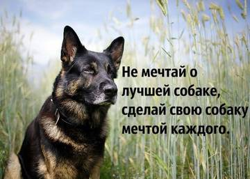 http://s2.uploads.ru/t/Zy2zR.jpg