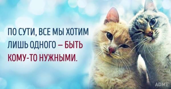 http://s2.uploads.ru/t/nzfFp.jpg