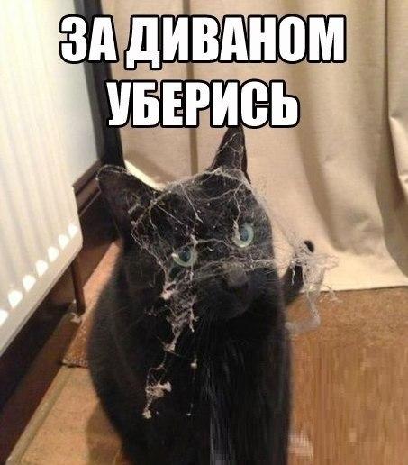 http://s2.uploads.ru/t/xEI28.jpg